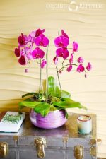 Orchid Republic